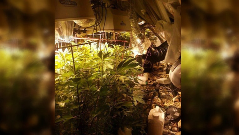 weedcollage_1459437010532.jpg