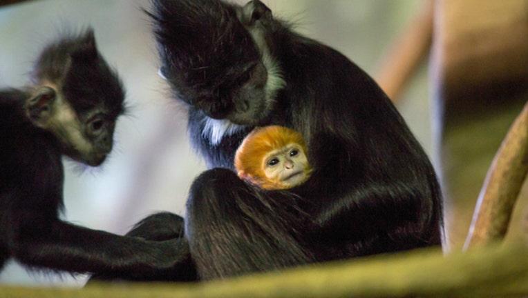 monkey_1486673307512.jpg