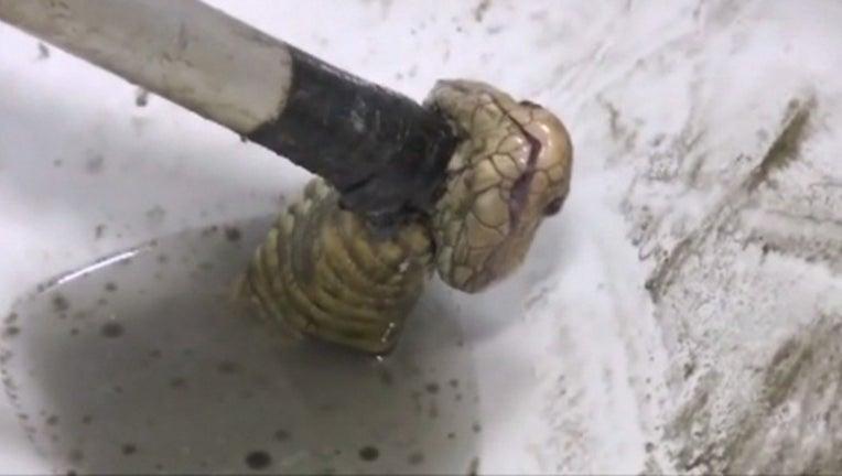 569dd9f2-snake-in-toilet_1465241430870-402970.jpg