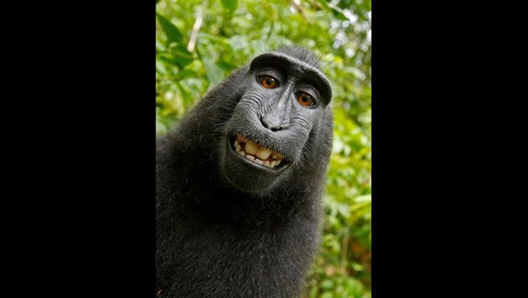59d6951f-Monkey takes selfie_1499899646223-405538