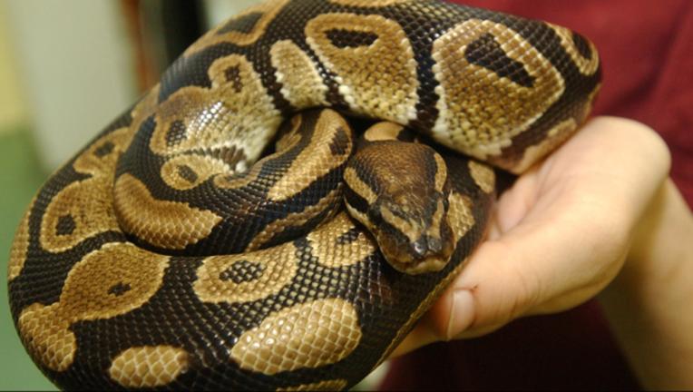 python_1464283296082-408795.png