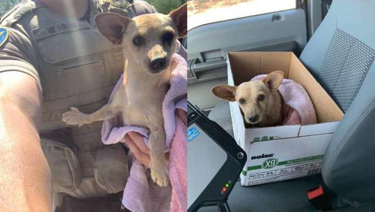 KSAZ dog rescued  by MCSO 061519_1560623423847.jpg-408200.jpg