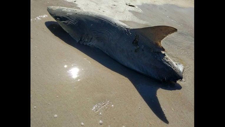 67eae169-shark bitten_1487630275034-401385.jpg