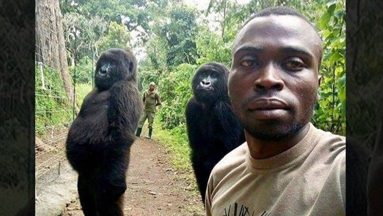 7139b945-gorillas for web_1556028163822.png-402429.jpg