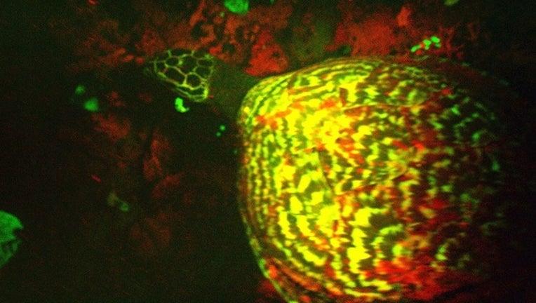 714494f7-turtle_1443577303451.jpg