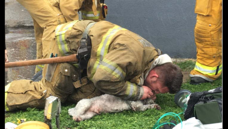 7c05bf08-dog rescue_1490374235310-407068.PNG