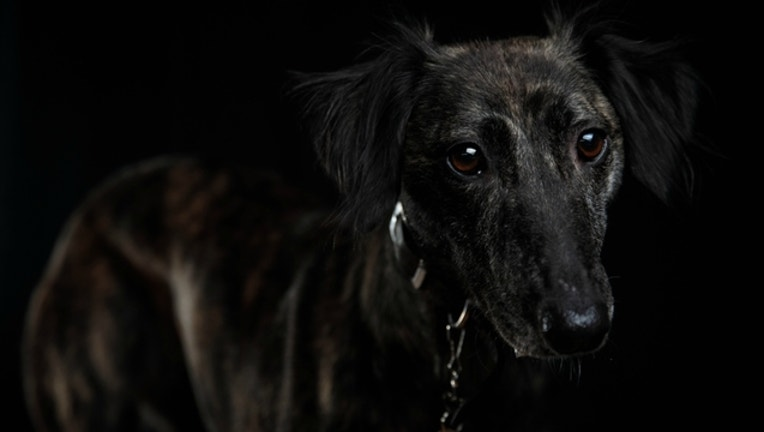 86fbbcd7-GETTY-sad-dog_1515685412911.jpg