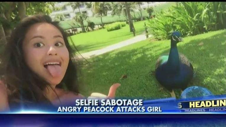 88a01019-peacock-selfie_1467563411770.jpg