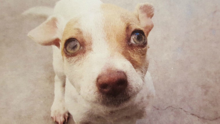 9132a999-dog-heroin_1464048339745.jpg