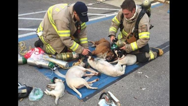 New Port Richey Texas firefighters help dogs rescued from a fire