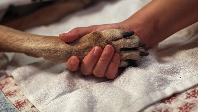 ab80b27f-GETTY dog paw_1558533132181.png-402429.jpg
