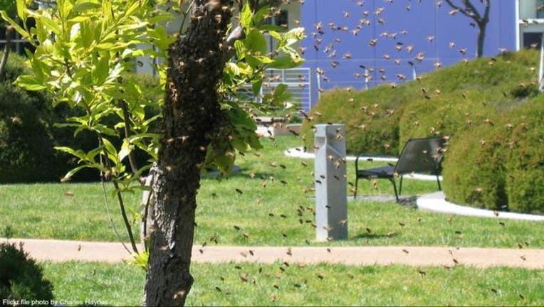 b1abafed-Bee swarm stock photo courtesy Charles Haynes via Flickr