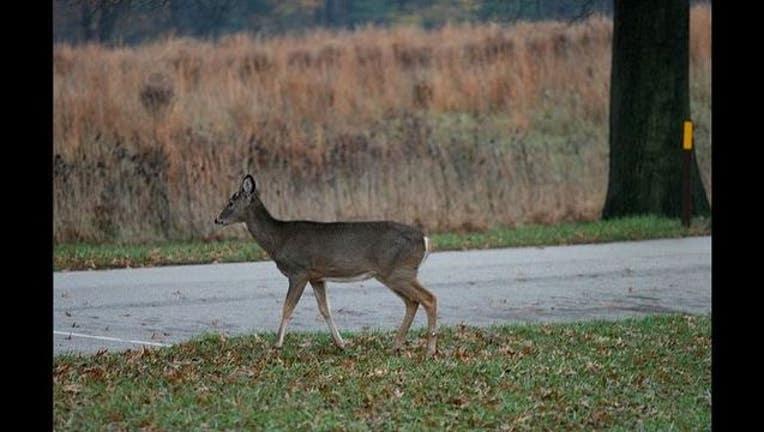 b446f14d-deer