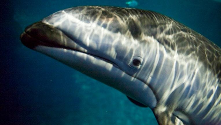 Shedd Aquarium Announces 2018 Free Days