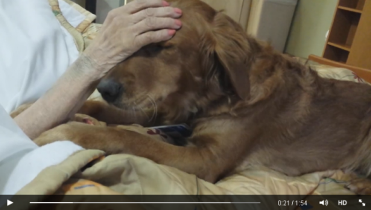 bf752b56-therapy-dog
