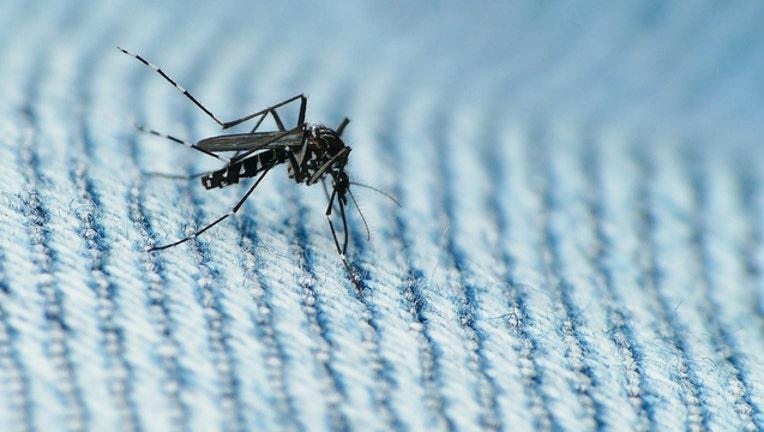 c2e7b12b-zika-mosquito_1464975385107.jpg
