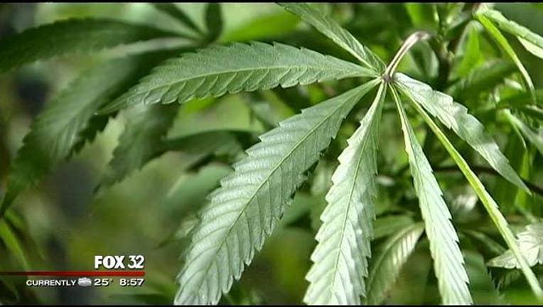 marijuana-leaf_1440951915816.jpg
