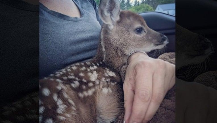 deer for web_1559669016546.png-402429.jpg