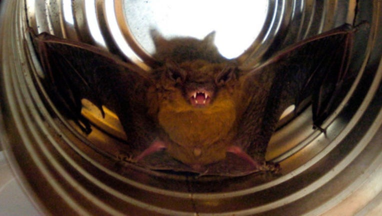 brown-bat.jpg
