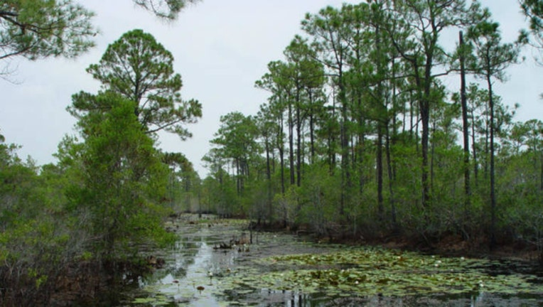 e1daf3f9-Alabama wetlands photo by US government