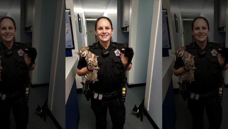 e958ad95-Texas deputy finds starving kittens_1531082063337.jpg-407693.jpg