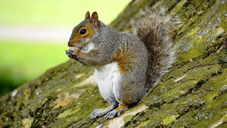 eb2063b7-squirrel_1478261744113-401385.jpg