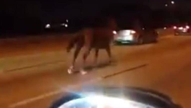 eb9b5a01-horse-highway_1467122917681.JPG