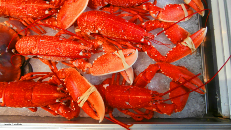 ec0f77f2-Lobsters file image