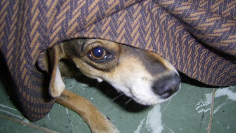 hiding dog_1463484783116-401385.jpg
