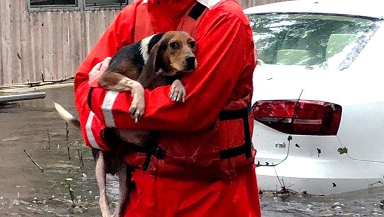 GETTY Pets Florence 092018_1537469506071.jpg-403440.jpg