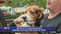 Mike's Perfect Pets: Rufus