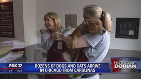 Dozens of dogs and cats arrive in Chicago from Carolinas