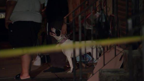 Police: 3 pit bulls thwart North Philadelphia home invasion, bite suspect