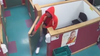 Police: Man caught on camera stealing a $7,000 dog from store