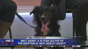 Mike's Pefect Pets: Ebony