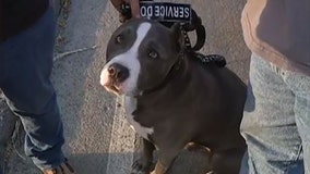 'In a panic': Service dog rescued from home as flames engulfed Southern California community