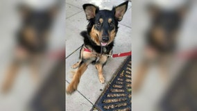 Restaurant offers $1,000 reward for dog that was stolen while owner was inside