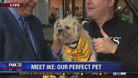 Mike's Perfect Pets: Ike