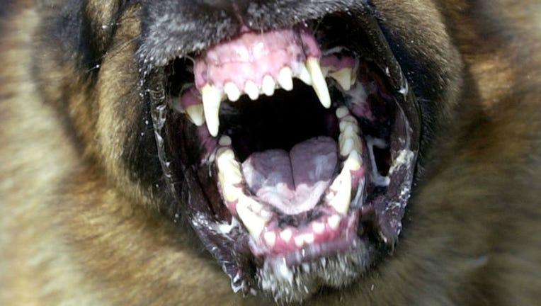 bba99450-GETTY-dog-teeth_1510158362953.jpg