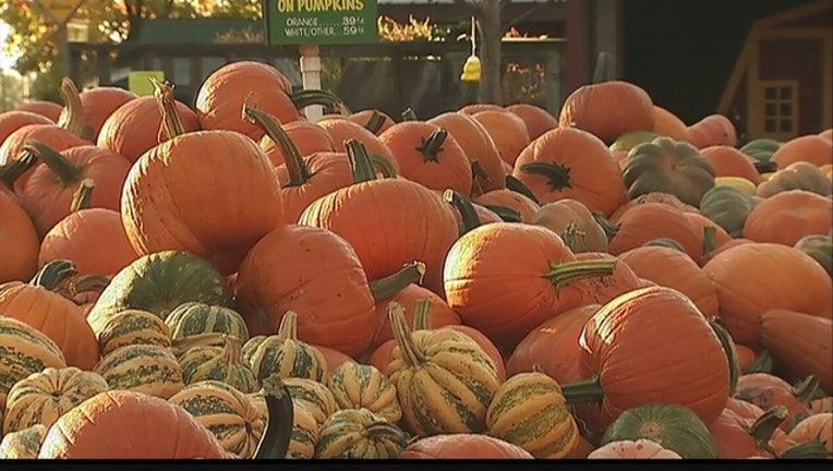 bc179a3f-pumpkins_1442410590631-404023-404023.jpg