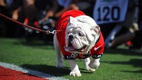 PETA takes aim at Uga, demands Georgia Bulldogs mascot's retirement