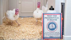 Presidential turkeys arrive in DC