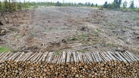 Deforestation is overrated as environmental threat, study finds
