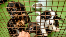 Senate unanimously passes bill to make animal cruelty a federal felony