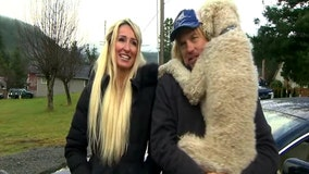 Beloved poodle reunited with owners after being taken by car thief