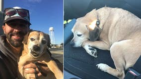 Man drives from Minnesota to Washington to reunite terminally ill woman with her dog