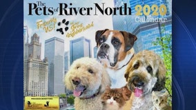 """Pets of River North"" calendar benefiting Chicago's homeless pets"