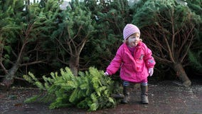 Bugs could live in your Christmas tree — here are some ways to get rid of them
