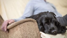 Punishment-based training can stress your dog out in the long term, study suggests