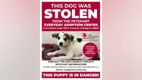 Puppy stolen from South Loop adoption center